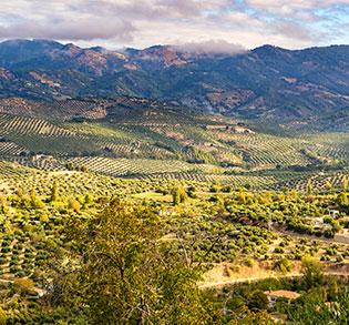 Sierra de Cazorla (DOP)