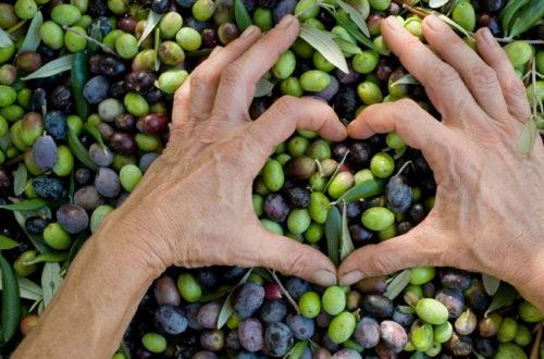 importancia del aceite de oliva en nuestra dieta